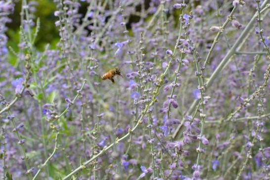 花に近づくミツバチ