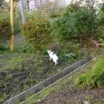 逃げる途中に振り返る猫