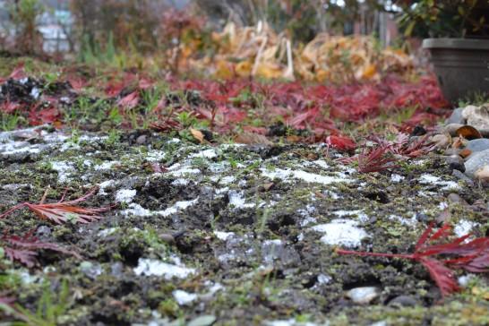 雪と落ち葉